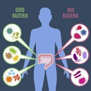 good and bad bacteria in gut